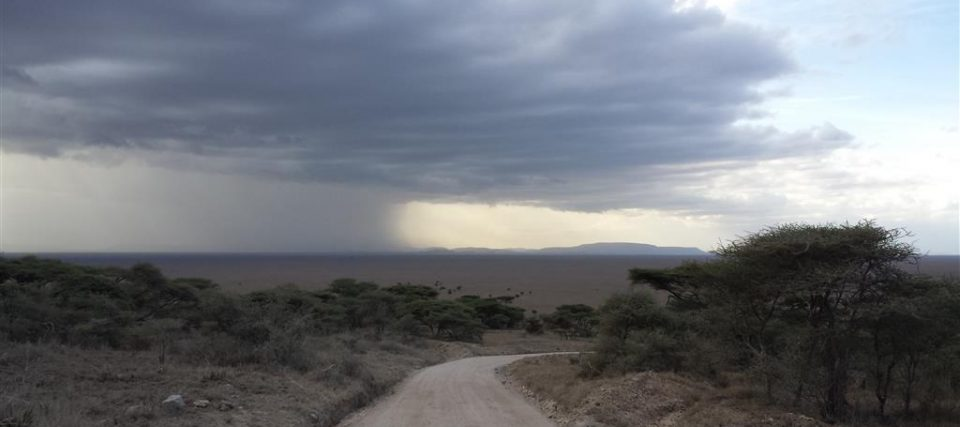 Serengeti Rains